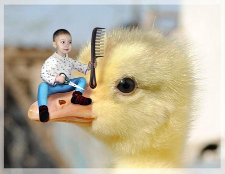 Гусиный парикмахер