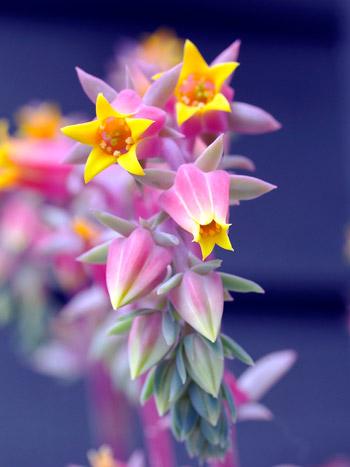 Фотоконкурс Вальс цветов