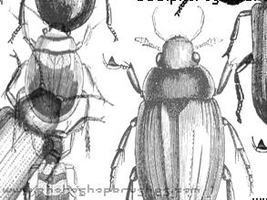 http://globator.net/uploads/posts/2007-10/1191583285_beetles.jpg