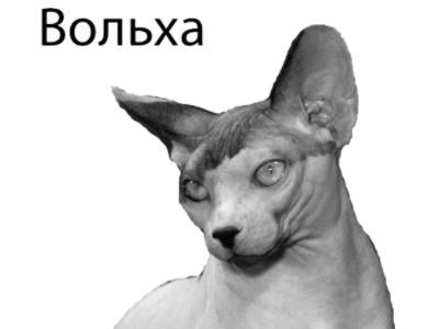 http://globator.net/uploads/posts/2007-10/1191586512_koshki.jpg