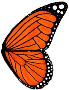Рисуем бабочек урок