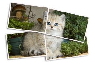 Урок по созданию эффекта разрезанного фото в Фотошопе